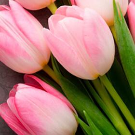 Мы поздравляем прекрасных дам с наступающим 8 Марта! График работы