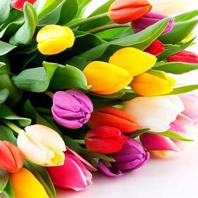 Команда KINODRIVE.kz поздравляет Вас с наступающим весенним праздником Наурыз Мейрамы!